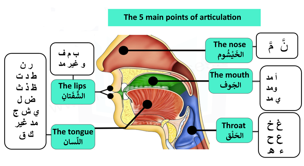 Points of articulations